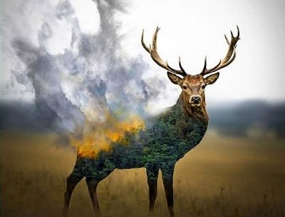 نگاهی-به-آثار-هنری-مرتبط-با-آتشسوزی-جنگلهای-زاگرس