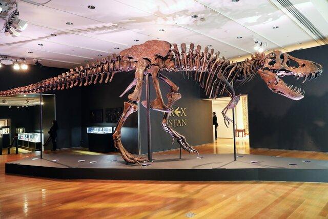 اسکلت-دایناسور-رکورد-حراج-را-زد