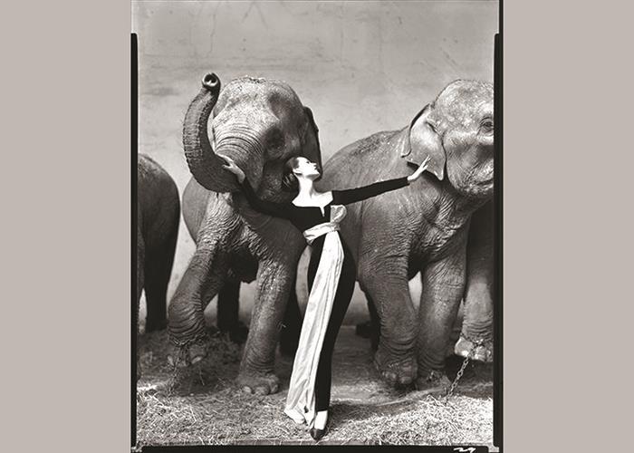 فیلهایی-که-به-پرواز-درآمدهاند
